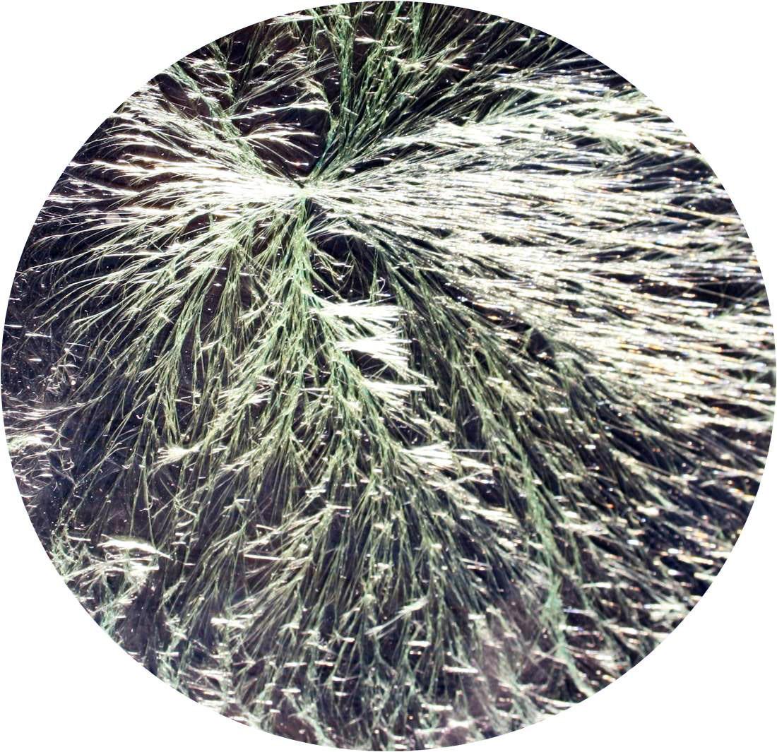 Kristallbild von Lebensmittel mit hoher Lebensenergie untersucht über Kupferchloridkristallisation nach Dr. Pfeiffer.